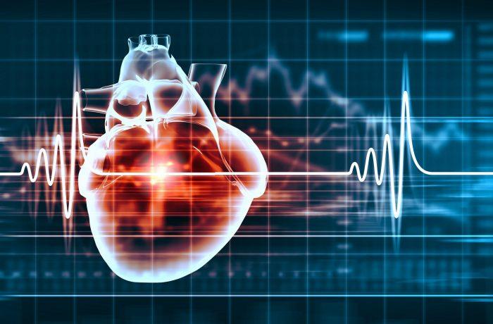 Herz- und Gefässerkrankungen